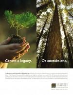 OCF-Tree-ad